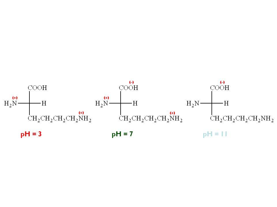 (–) (–) (+) (+) (+) (+) pH = 3 pH = 7 pH = 11