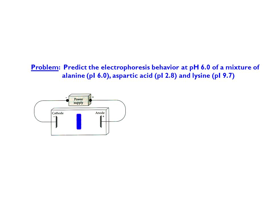 Problem: Predict the electrophoresis behavior at pH 6