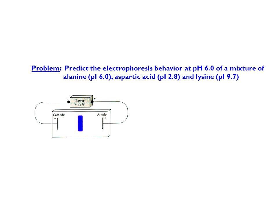 Problem: Predict the electrophoresis behavior at pH 6