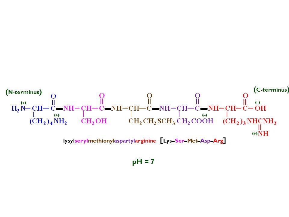 (C-terminus) (N-terminus) pH = 7
