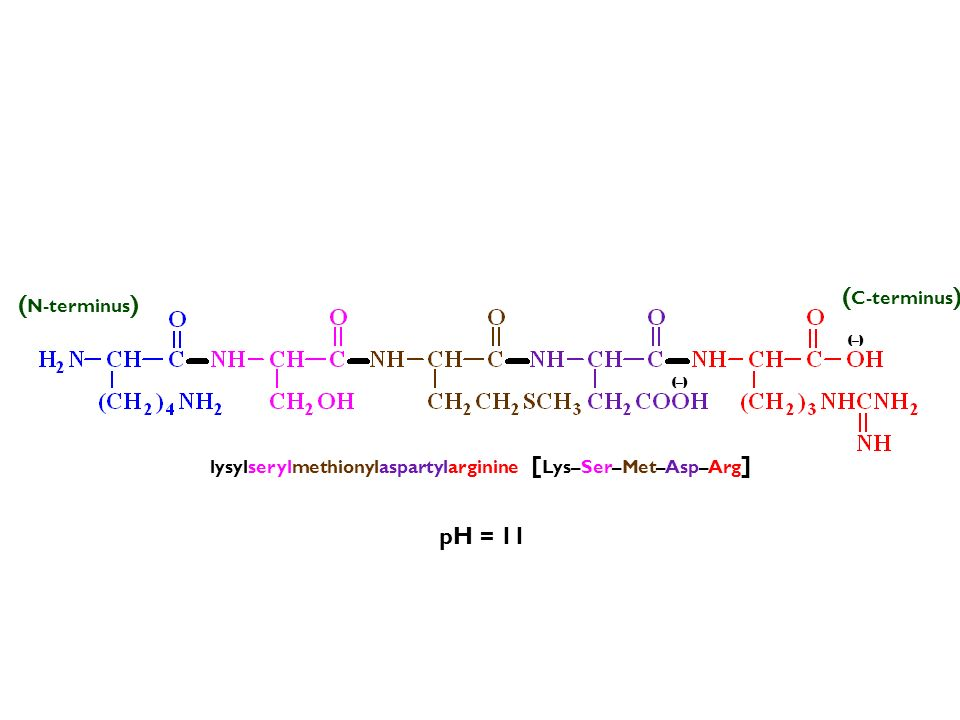 (C-terminus) (N-terminus) pH = 11