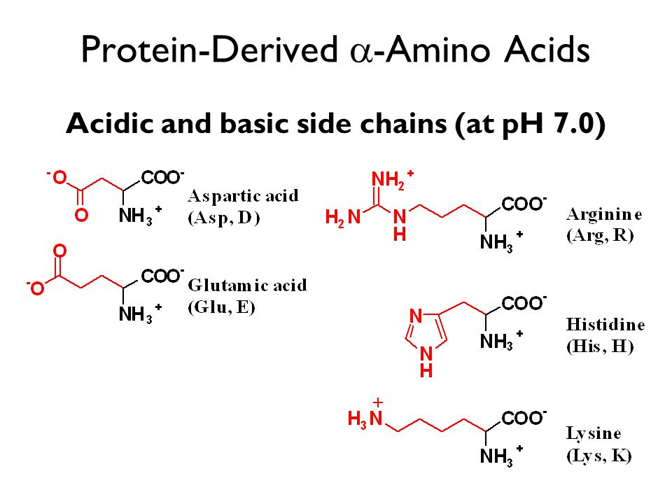 Protein-Derived -Amino Acids