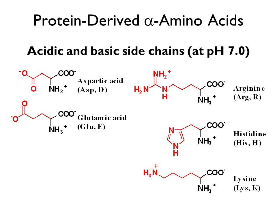 Protein-Derived -Amino Acids