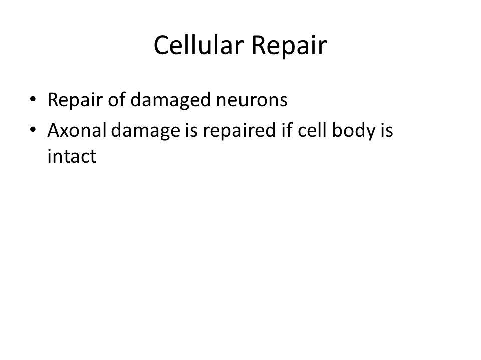 Cellular Repair Repair of damaged neurons