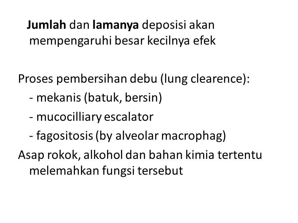 Jumlah dan lamanya deposisi akan mempengaruhi besar kecilnya efek Proses pembersihan debu (lung clearence): - mekanis (batuk, bersin) - mucocilliary escalator - fagositosis (by alveolar macrophag) Asap rokok, alkohol dan bahan kimia tertentu melemahkan fungsi tersebut