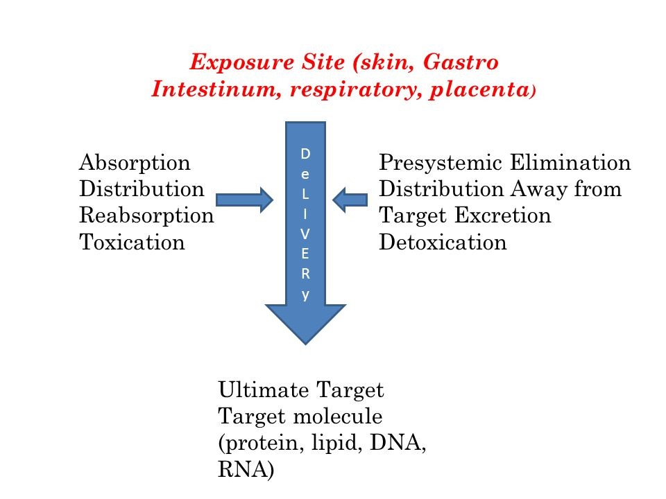 Exposure Site (skin, Gastro Intestinum, respiratory, placenta)