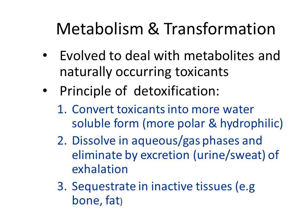 Metabolism & Transformation