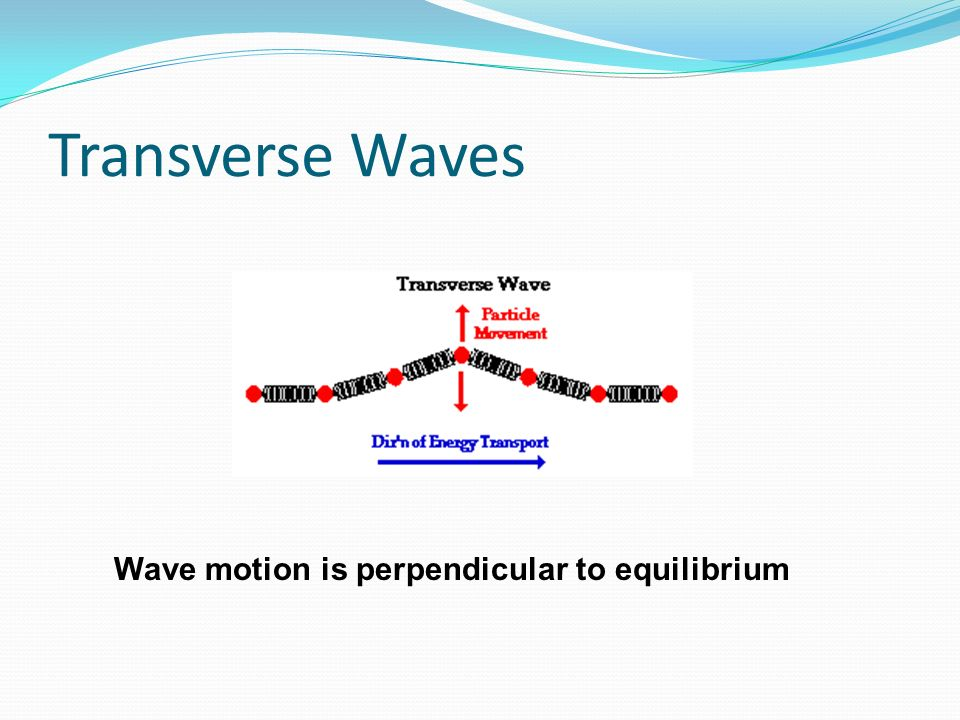 Transverse Waves Wave motion is perpendicular to equilibrium