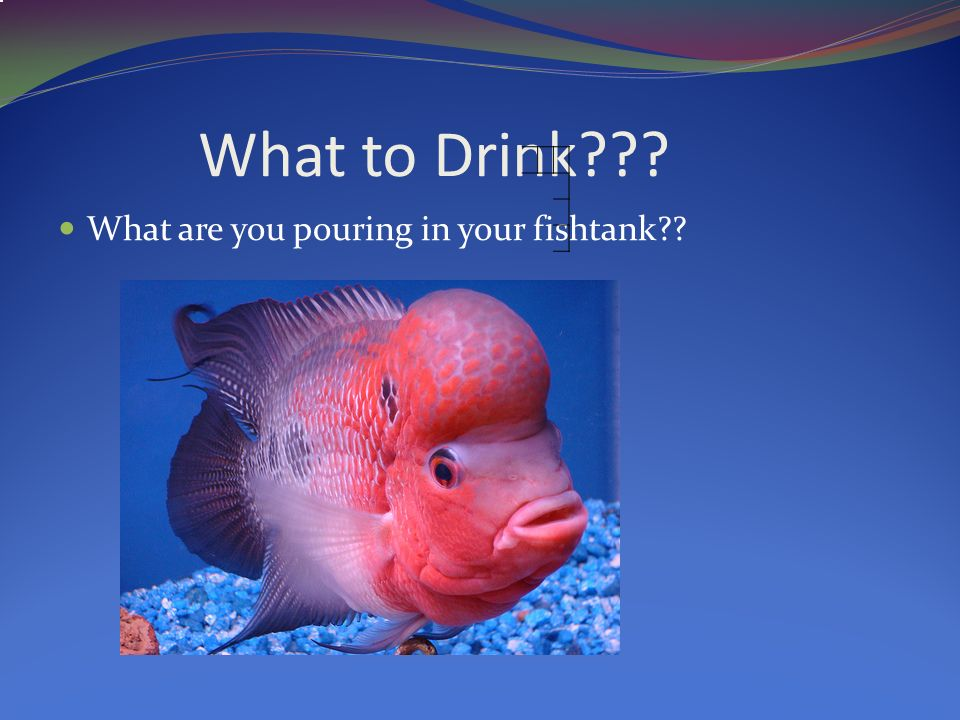 What to Drink What are you pouring in your fishtank