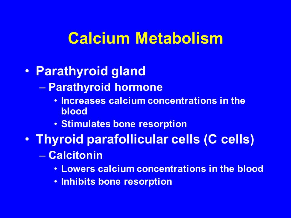 Calcium Metabolism Parathyroid gland