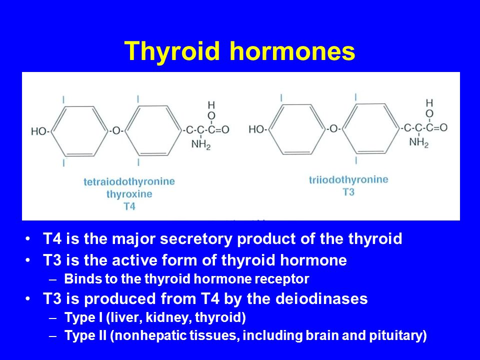 Thyroid hormones T4 is the major secretory product of the thyroid