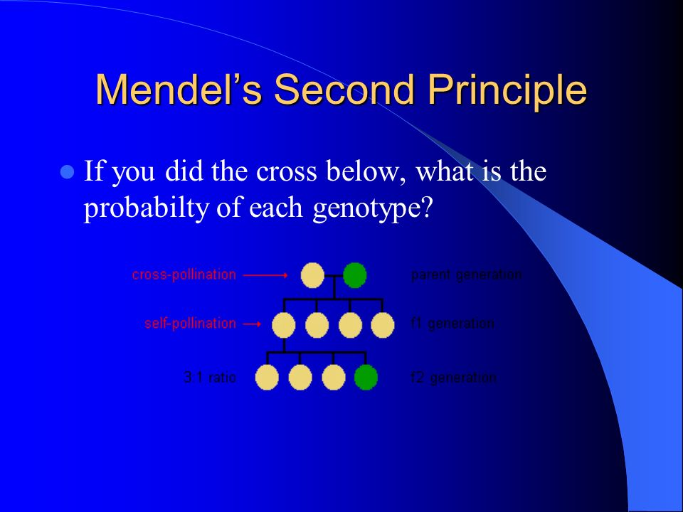 Mendel's Second Principle