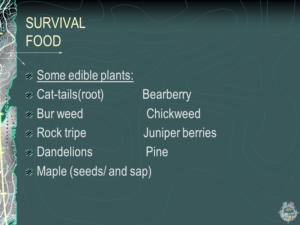 SURVIVAL FOOD Some edible plants: Cat-tails(root) Bearberry