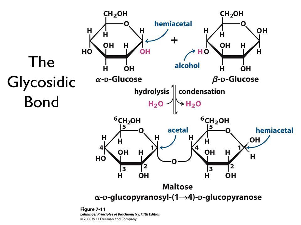 The Glycosidic Bond