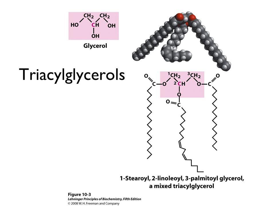 Triacylglycerols