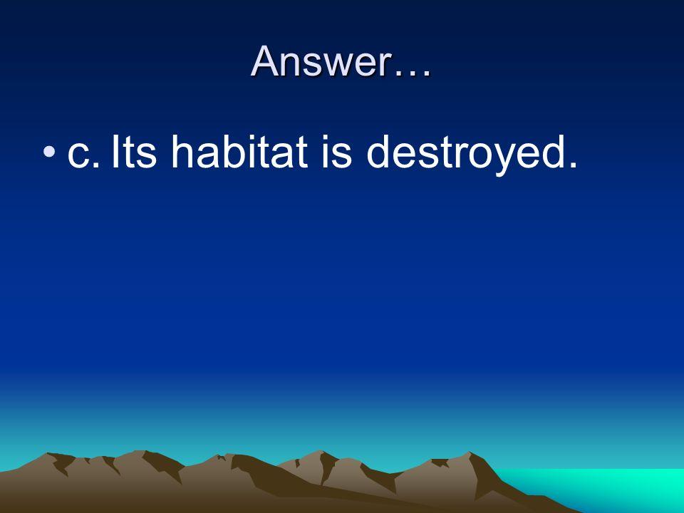 c. Its habitat is destroyed.