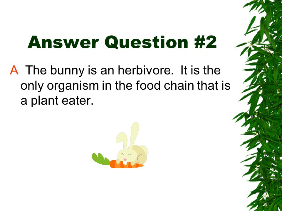 Answer Question #2A The bunny is an herbivore.