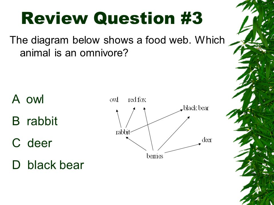 Review Question #3 A owl B rabbit C deer D black bear