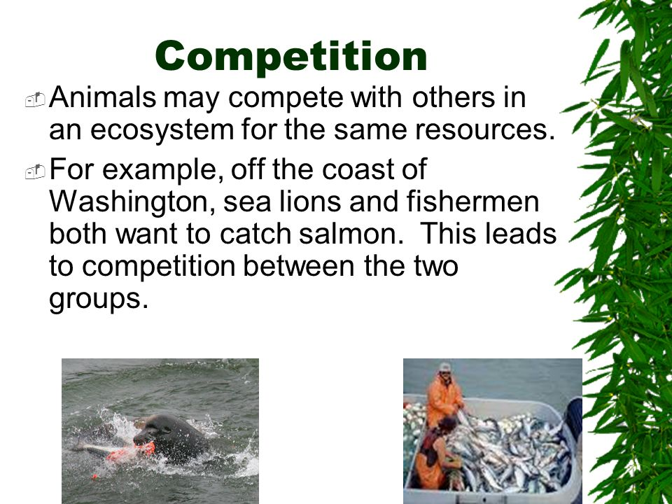 Competition Animals may compete with others in an ecosystem for the same resources.