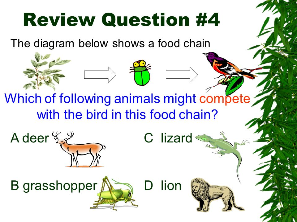 Review Question #4 The diagram below shows a food chain. Which of following animals might compete with the bird in this food chain