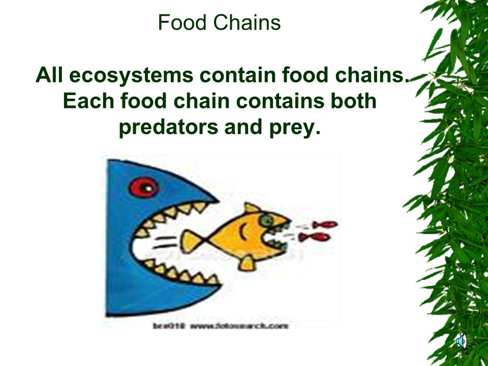Food Chains All ecosystems contain food chains