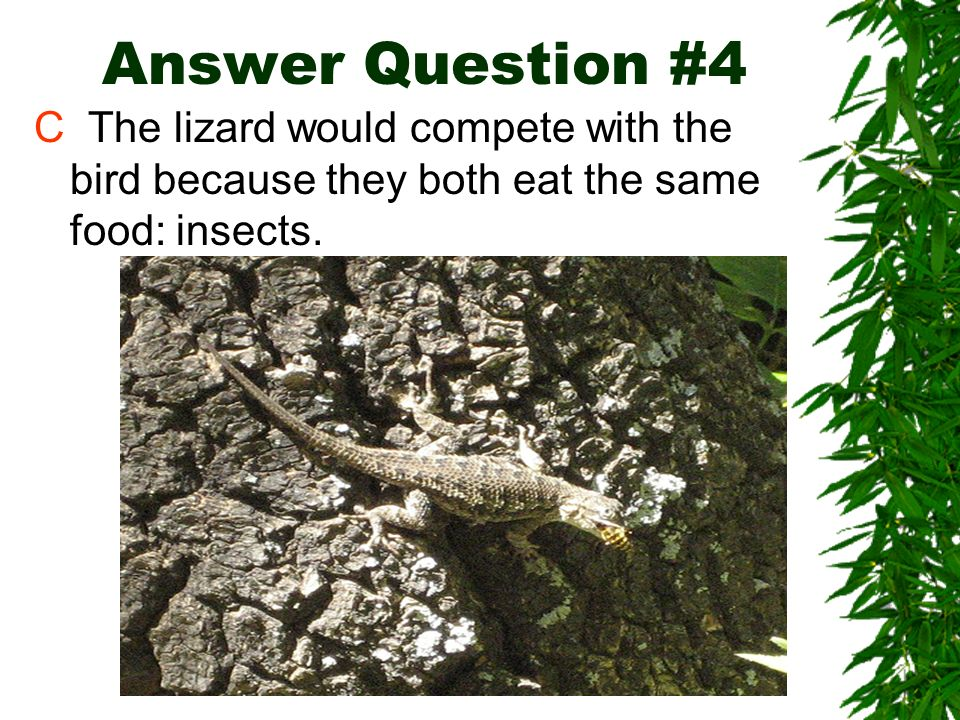 Answer Question #4 C The lizard would compete with the bird because they both eat the same food: insects.