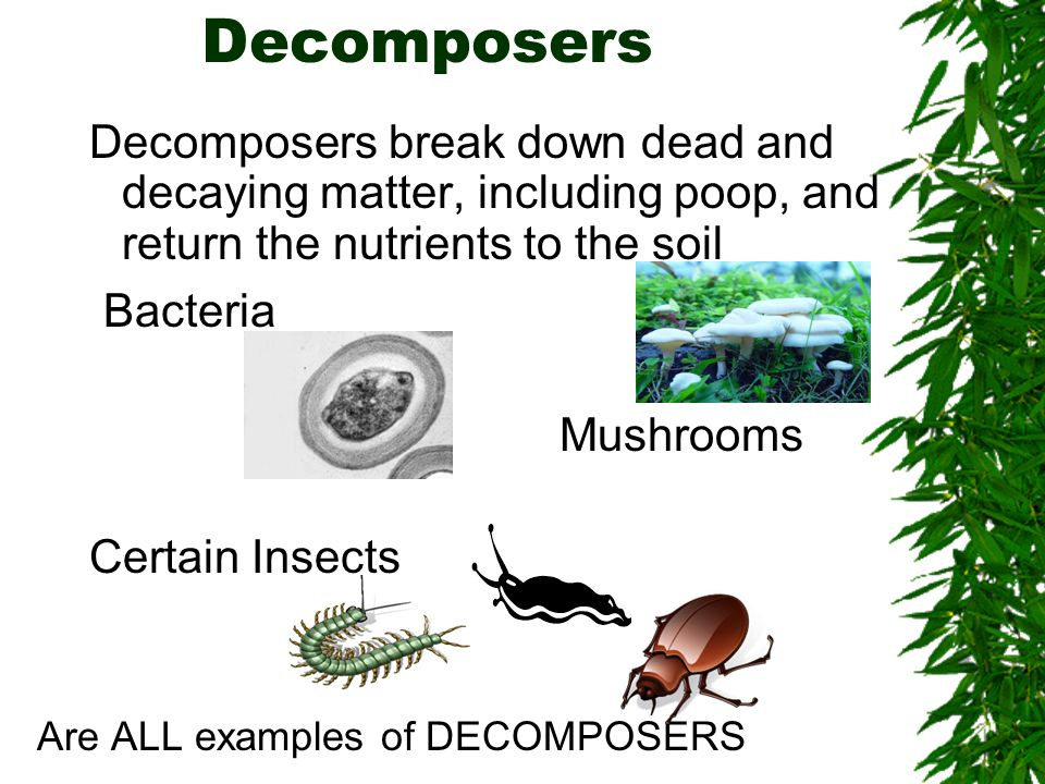 Decomposers Decomposers break down dead and decaying matter, including poop, and return the nutrients to the soil.
