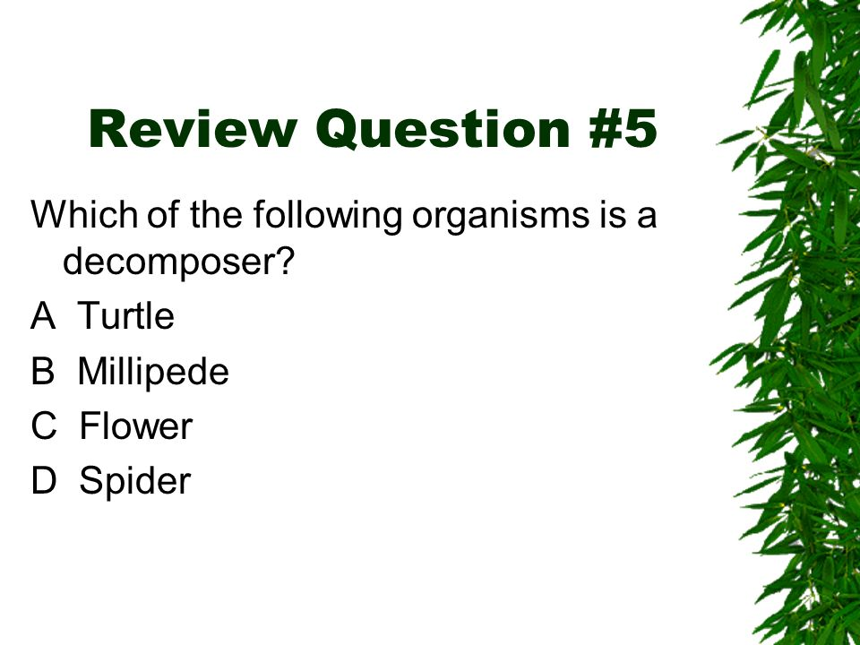 Review Question #5 Which of the following organisms is a decomposer