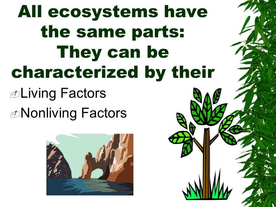 All ecosystems have the same parts: They can be characterized by their
