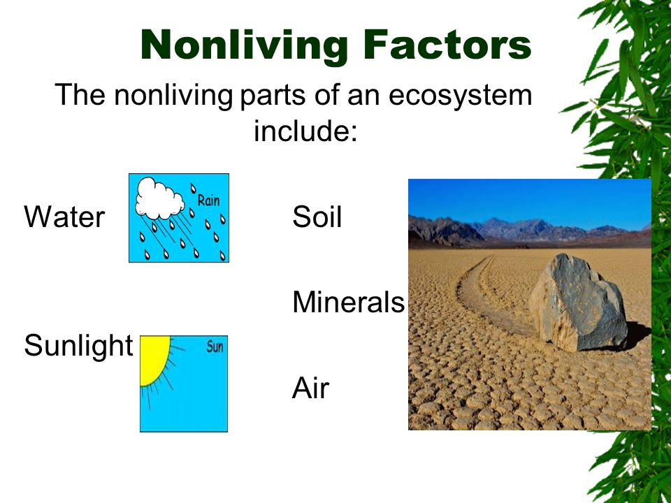 The nonliving parts of an ecosystem include: