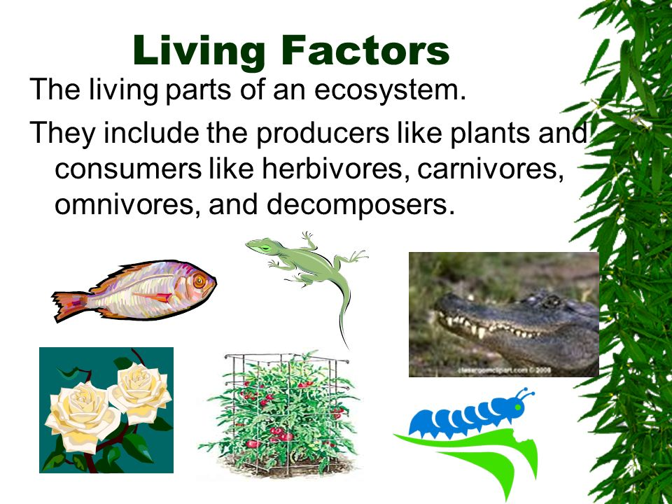 Living Factors The living parts of an ecosystem.