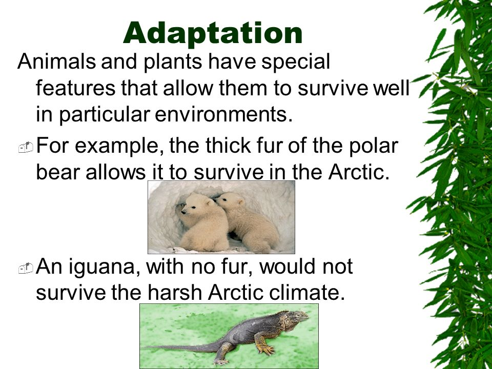 Adaptation Animals and plants have special features that allow them to survive well in particular environments.
