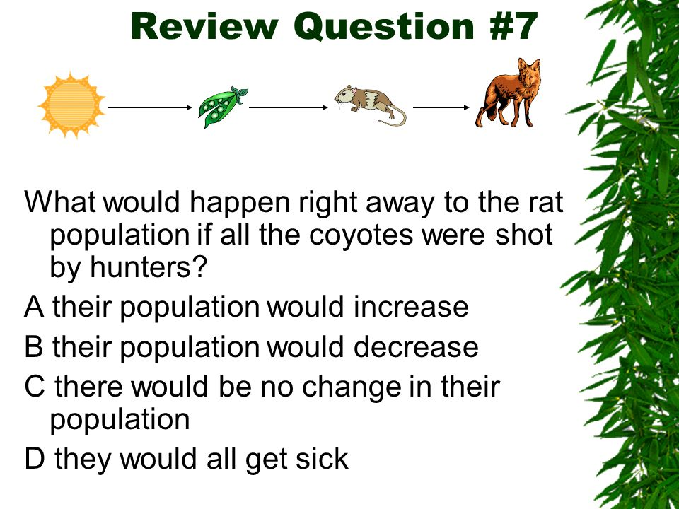 Review Question #7 What would happen right away to the rat population if all the coyotes were shot by hunters