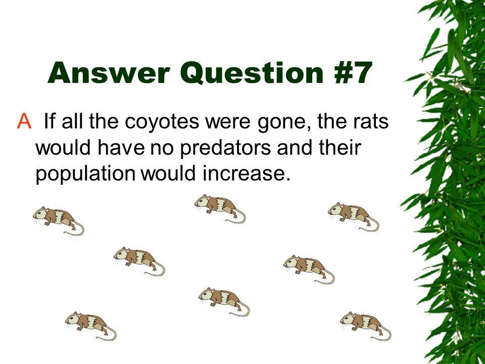Answer Question #7A If all the coyotes were gone, the rats would have no predators and their population would increase.