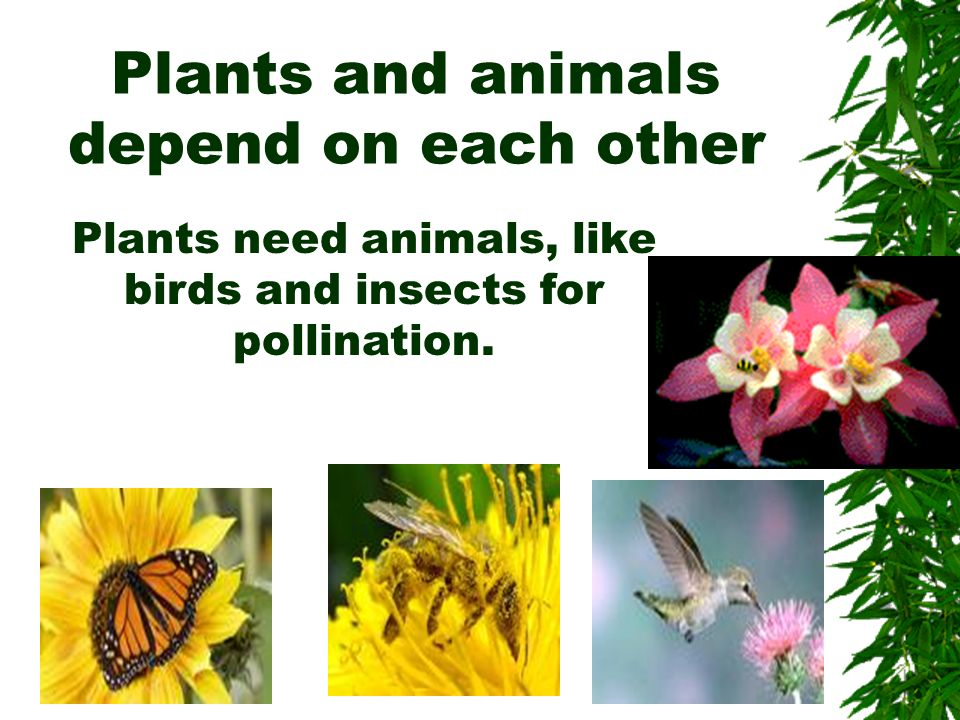Plants and animals depend on each other
