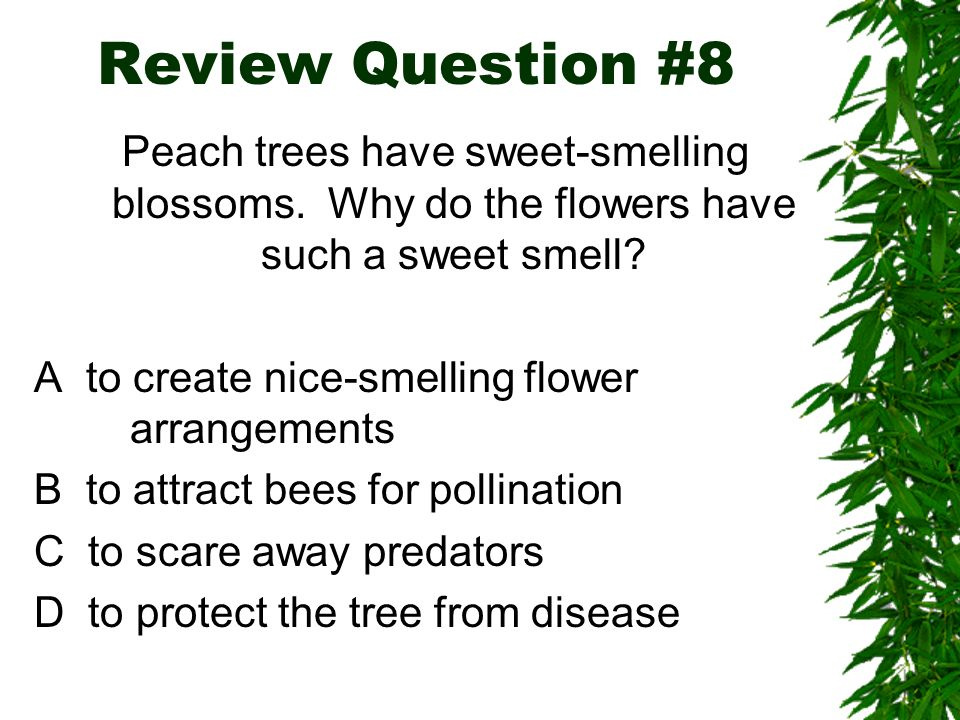 Review Question #8 Peach trees have sweet-smelling blossoms. Why do the flowers have such a sweet smell