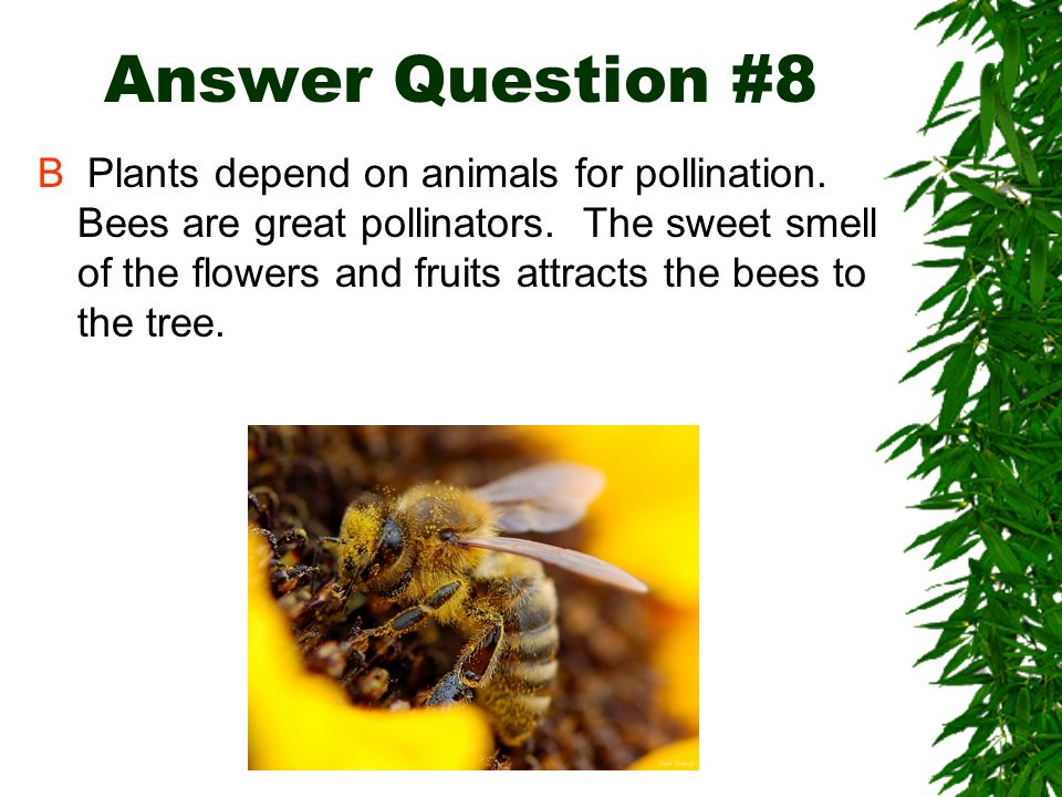 Answer Question #8