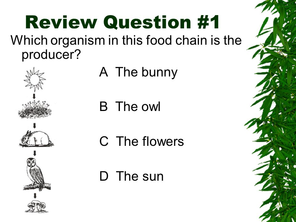 Review Question #1 Which organism in this food chain is the producer