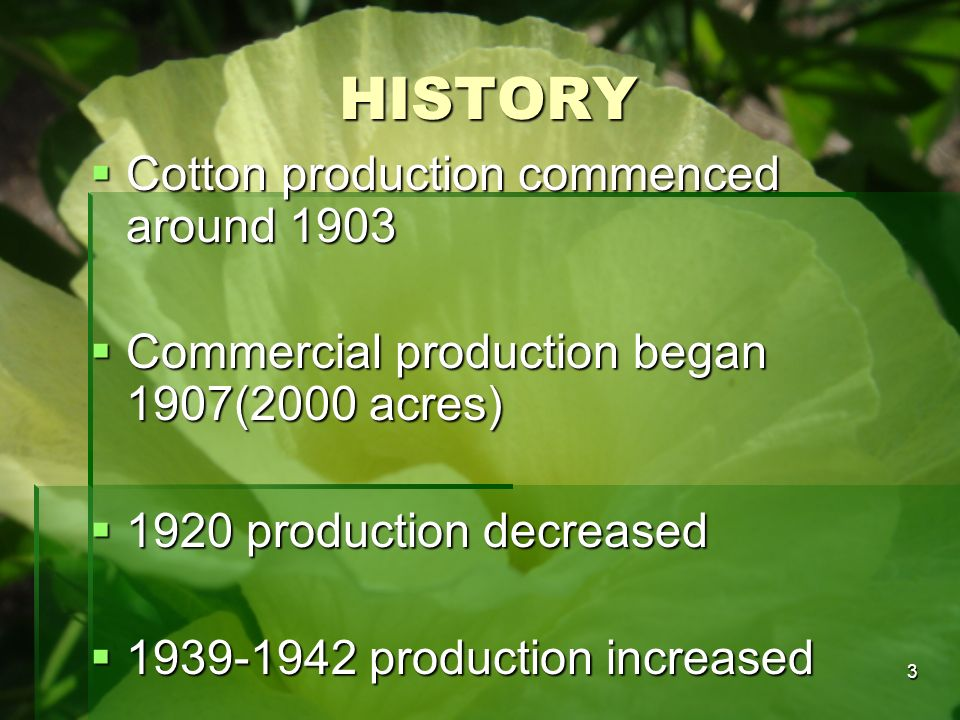 HISTORY Cotton production commenced around 1903