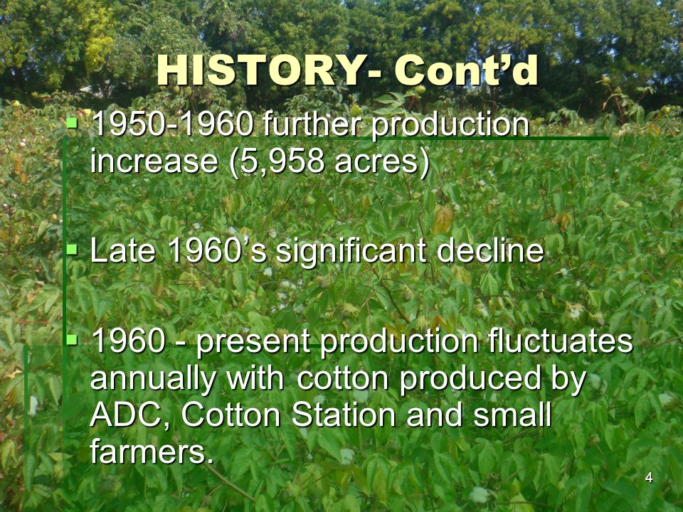 HISTORY- Cont'd 1950-1960 further production increase (5,958 acres)