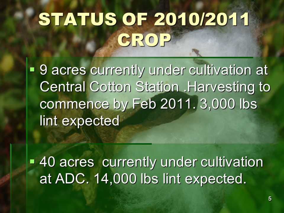 STATUS OF 2010/2011 CROP 9 acres currently under cultivation at Central Cotton Station .Harvesting to commence by Feb 2011. 3,000 lbs lint expected.