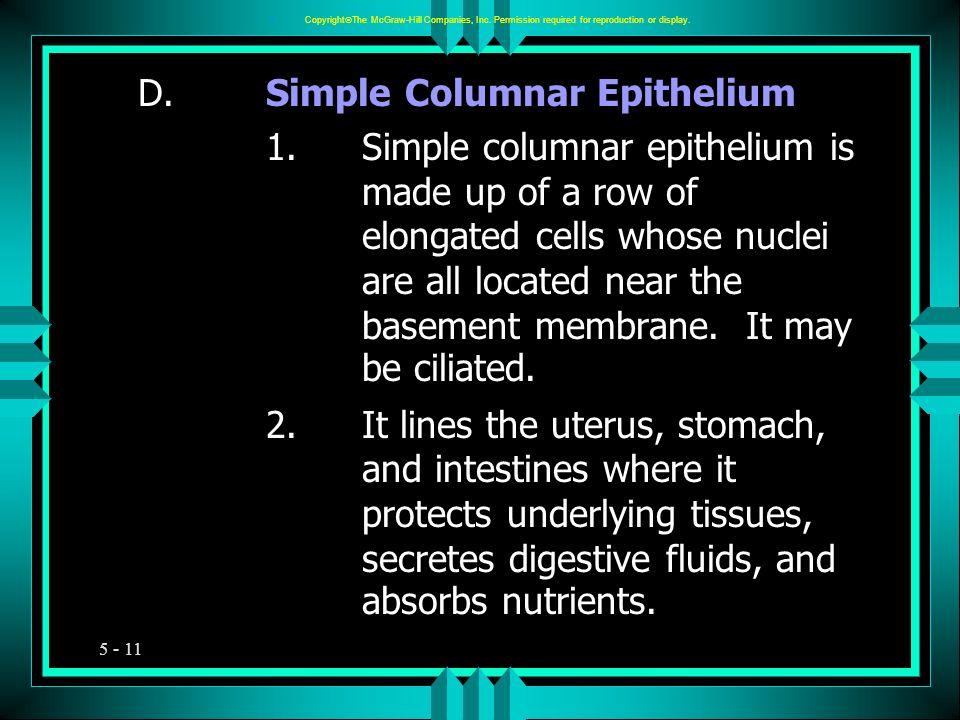D. Simple Columnar Epithelium