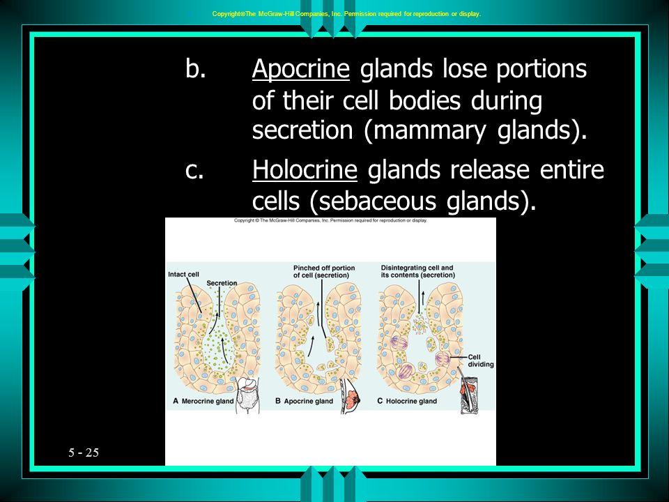 c. Holocrine glands release entire cells (sebaceous glands).