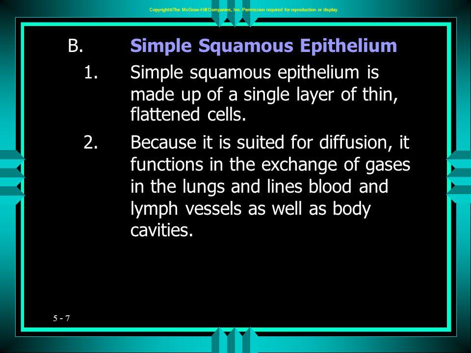 B. Simple Squamous Epithelium