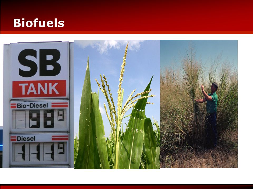 Biofuels Each box is many Ph.D.s of information Biotech versus pharma