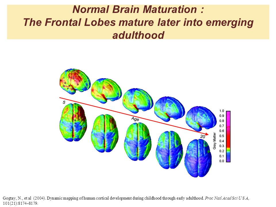 Normal Brain Maturation : The Frontal Lobes mature later into emerging adulthood