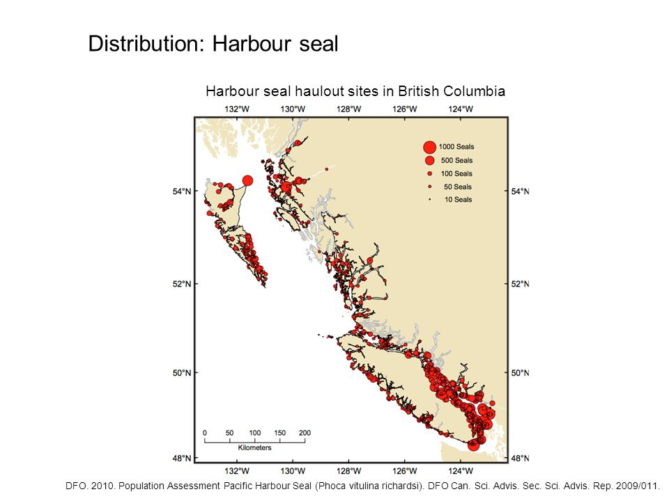 Distribution: Harbour seal