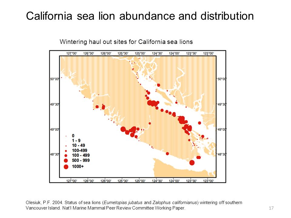 California sea lion abundance and distribution