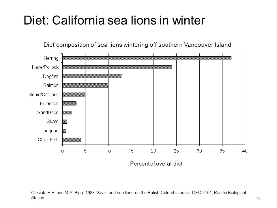 Diet: California sea lions in winter