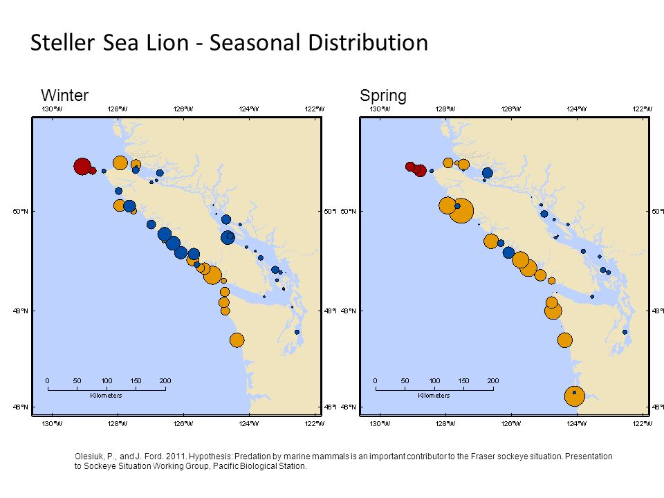 Steller Sea Lion - Seasonal Distribution